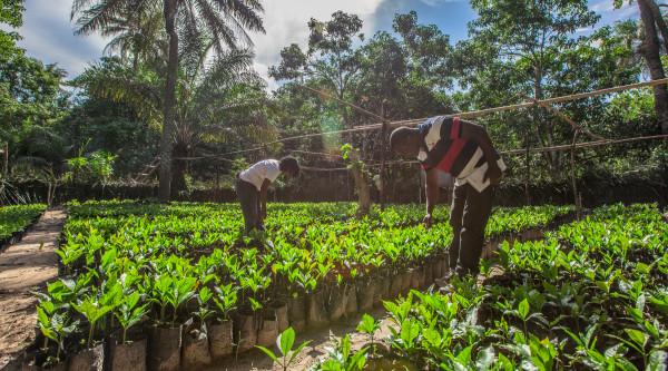 Promuovere l'agricoltura su piccola scala in Sierra Leone