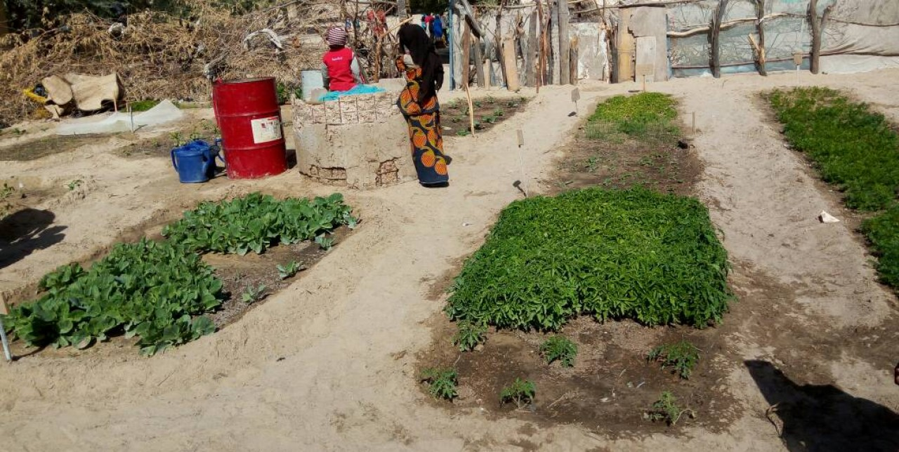 Niger: parents cultivate vegetable gardens at school