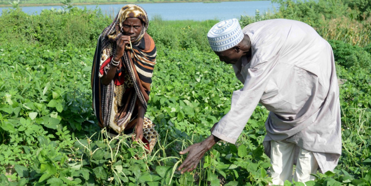 Food security in Chad: activities and results