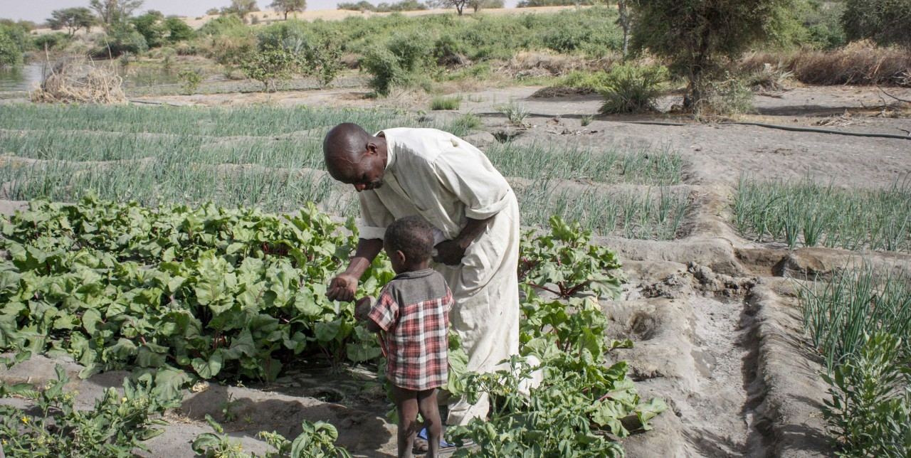 Lake Chad: journey through farmers challenging desertification