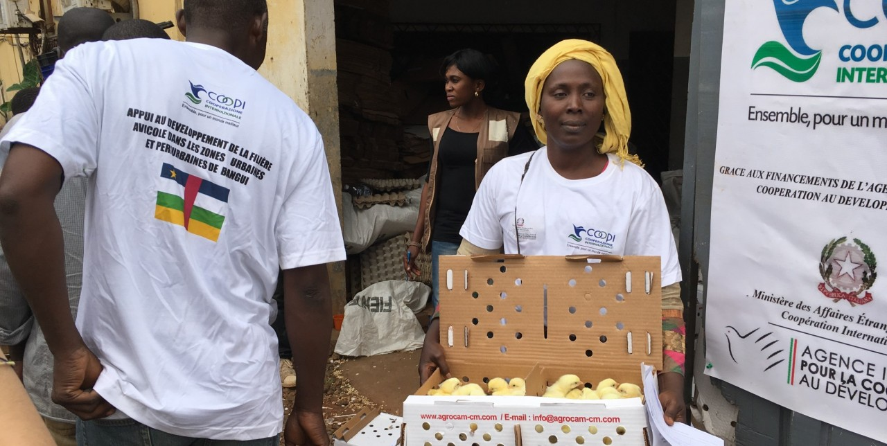 CAR: poultry kits and chicks distributed to 130 breeders