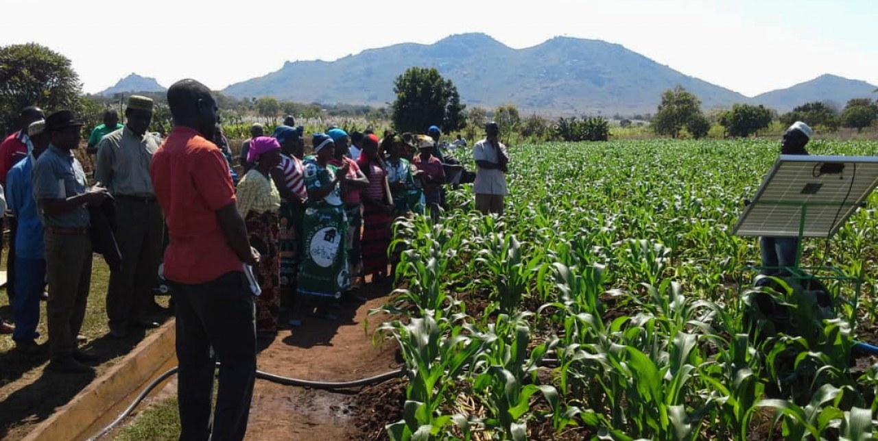 Malawi: irrigated agriculture ensures food security in Katuli