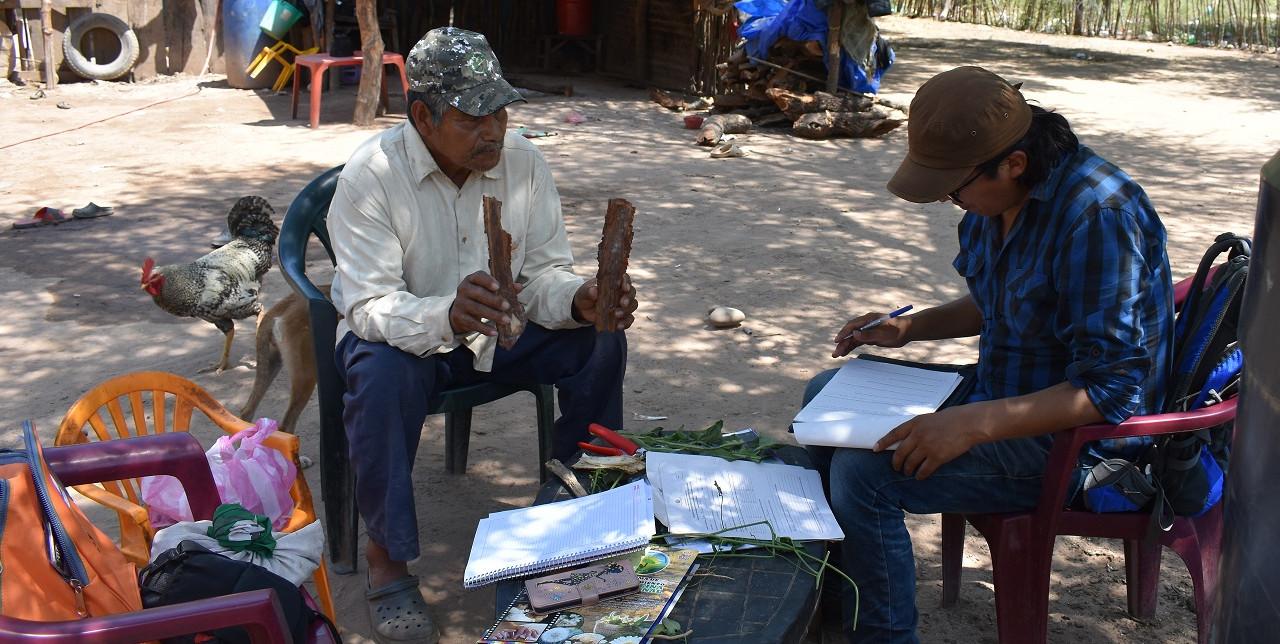 Gran Chaco, medicina indigena: avviata la prima enciclopedia botanica