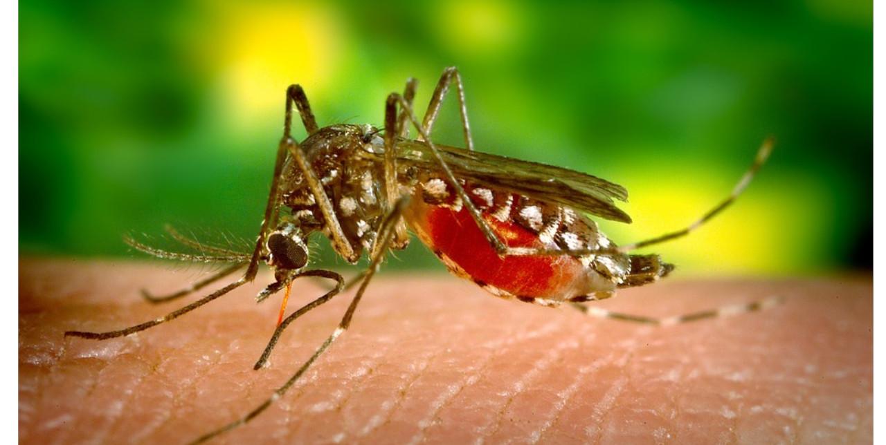 25 aprile 2019, Malaria Day: La malaria viaggia anche in prima classe