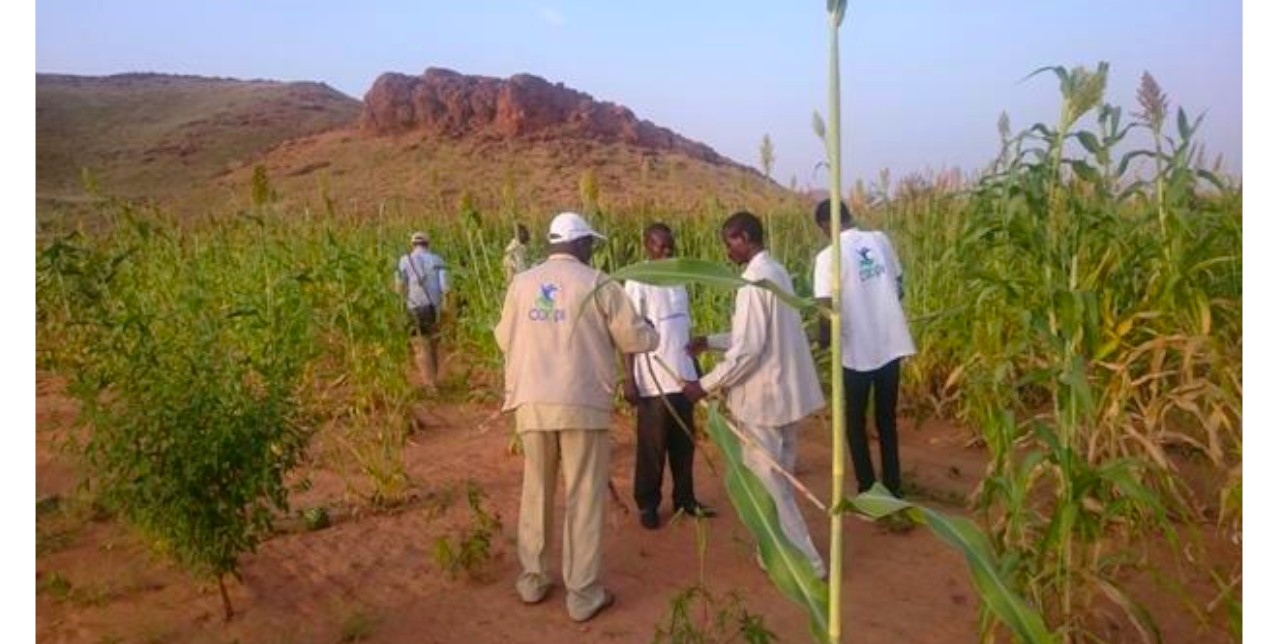 North Darfur: Abubaker teaches us how ancestors faced drought