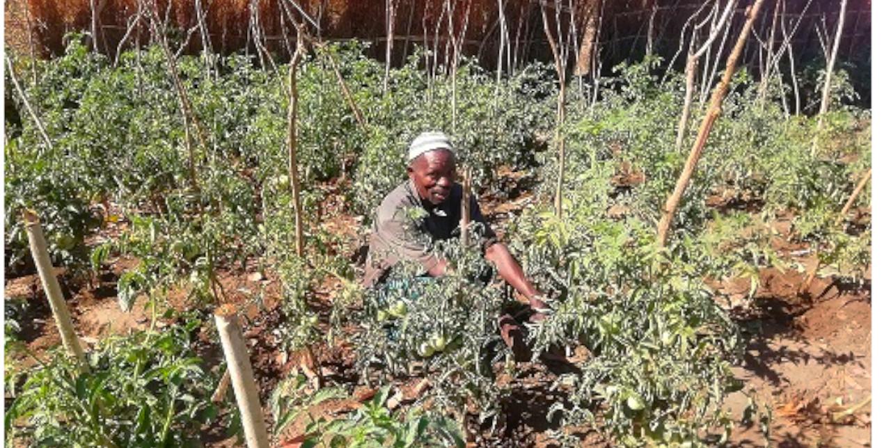 """Malawi. Agricoltura sostenibile: """"Ora posso sfamare la mia famiglia"""""""