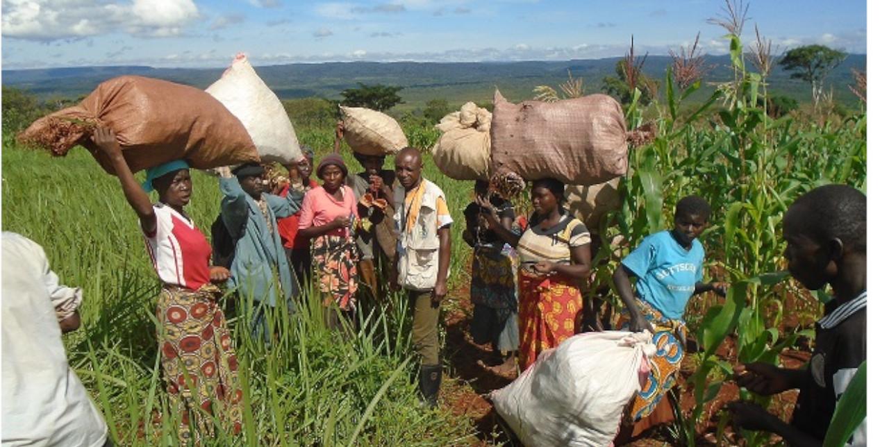 RDC : plus de sécurité alimentaire pour sauver le parc de l'Upemba