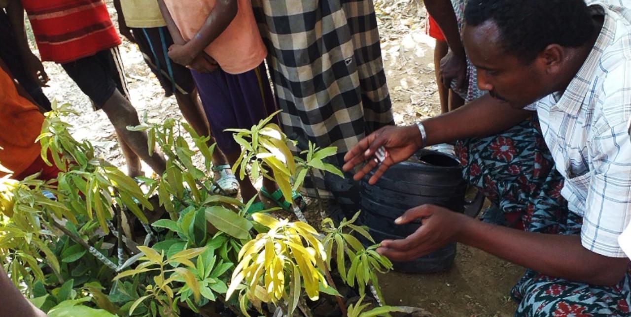 Etiopia: distribuite 1.000 piante da frutto e formazione agricola