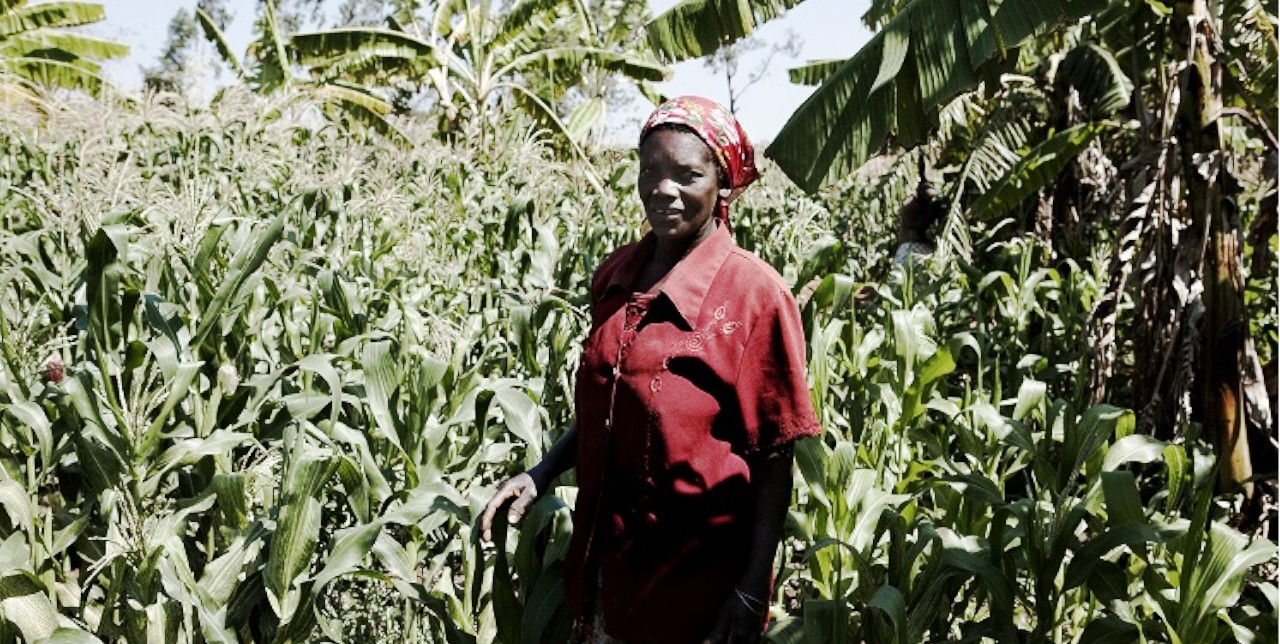 DRC, Djugu. Agricultural inputs for 6,700 beneficiaries
