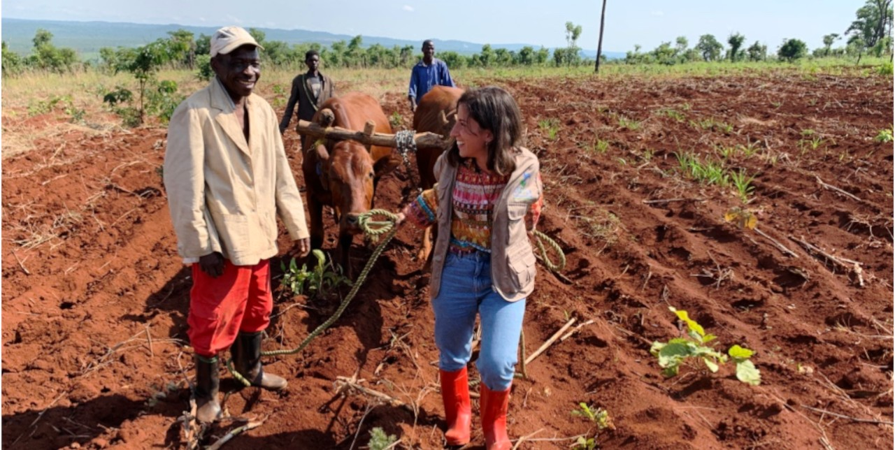RDC. La traction des vaches et la pisciculture : deux projets de succès