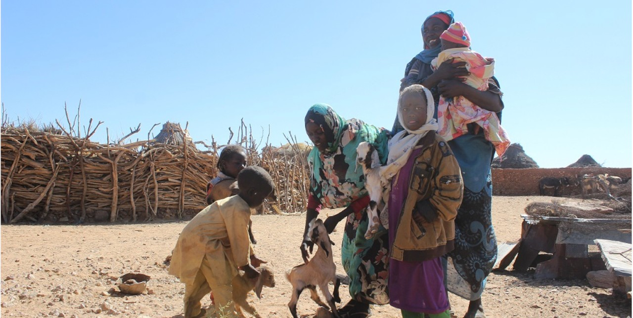 North Darfur. Goats' distribution to Women Head House Holdput end to communities' suffering