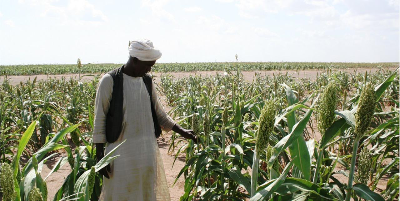 """Sudan. """"Ora posso garantire la sicurezza alimentare a tutta la mia famiglia"""""""