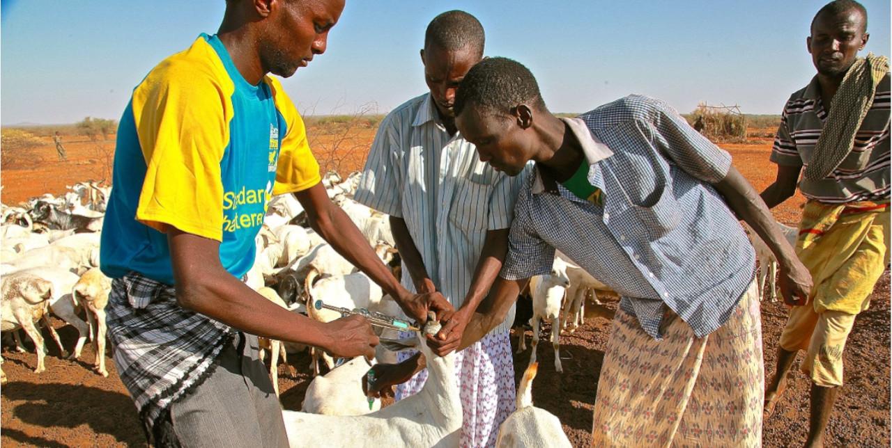 Somalia. La fattoria di Sanbur è ripartita