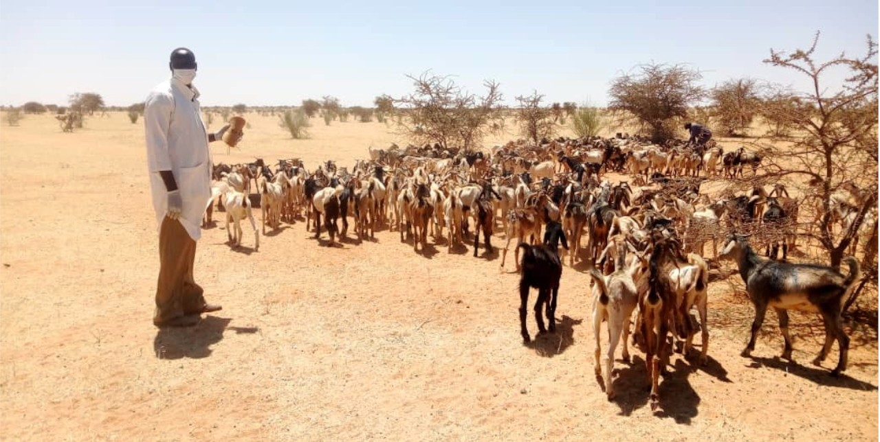 North Darfur. A fast answer to the flood rebuilt communities' livelihoods