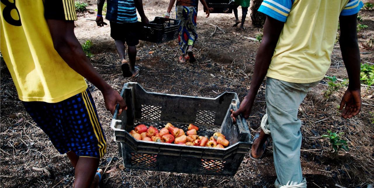 Sierra Leone. Nuovi posti di lavoro nelle comunità rurali