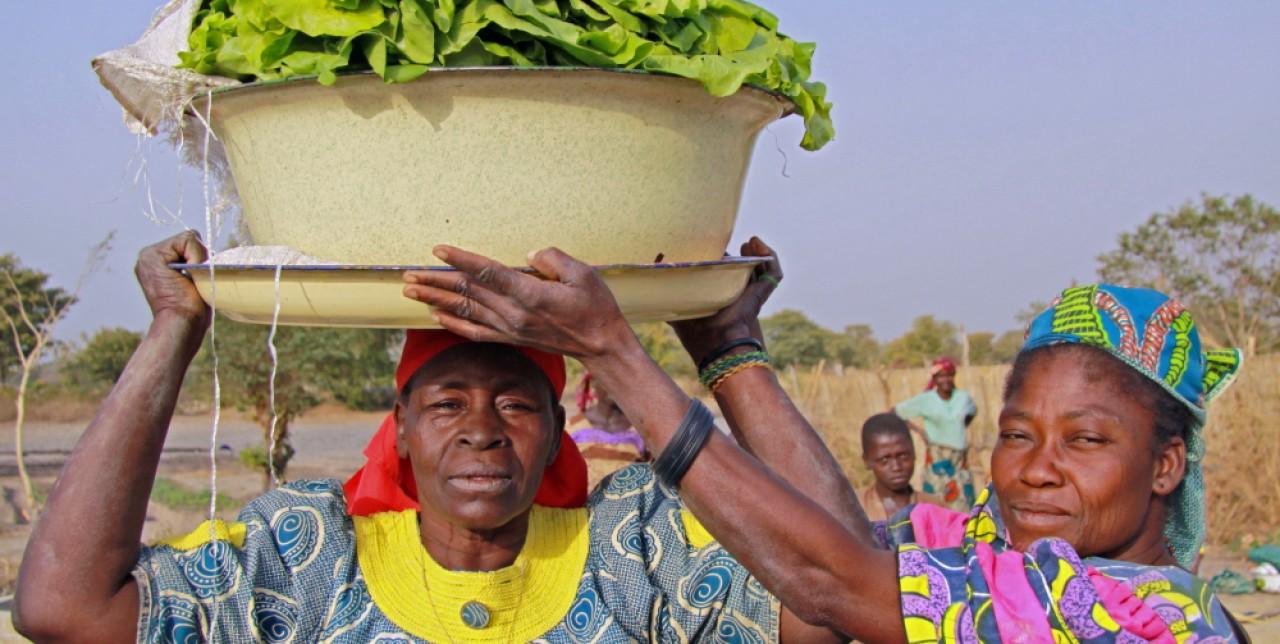 Farming and livestock rearing to eradicate poverty in Chad