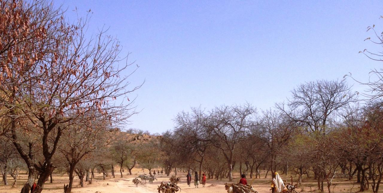 Con arachidi e sesamo cambia la vita in Ciad